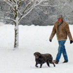 dog_walking_in_snow